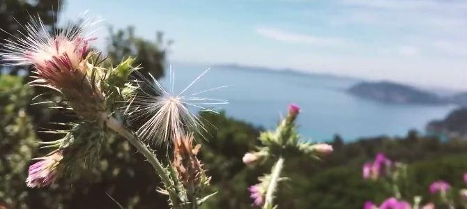 Urlaubsvideo Frankreich 2015